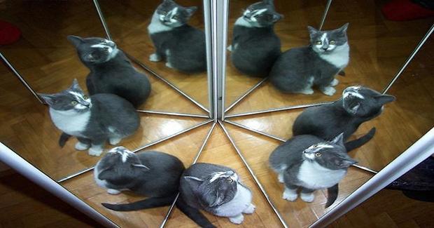 Koliko se mačaka nalazi na ovoj fotografiji? [FOTO]