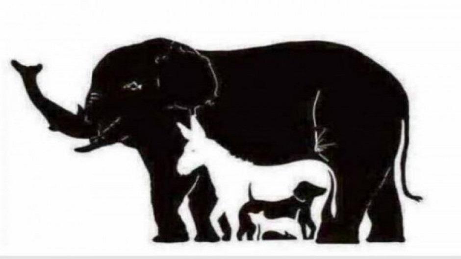 Mozgalica: Pronađite devet životinja u 60 sekundi