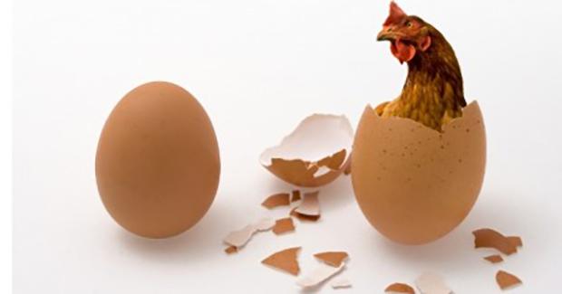 Šta je starije: kokoška ili jaje? [VIDEO]