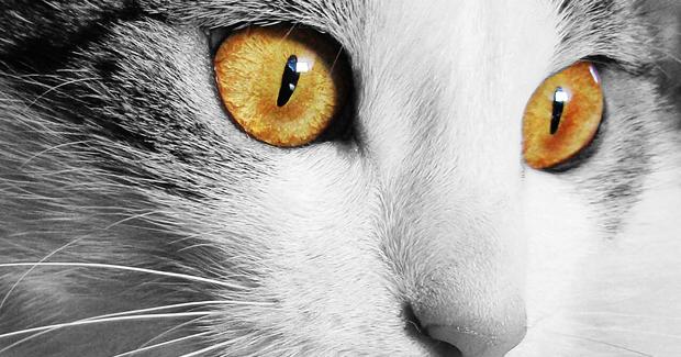Koja životinja vidi isto kao i vi? Testirajte svoj vid!