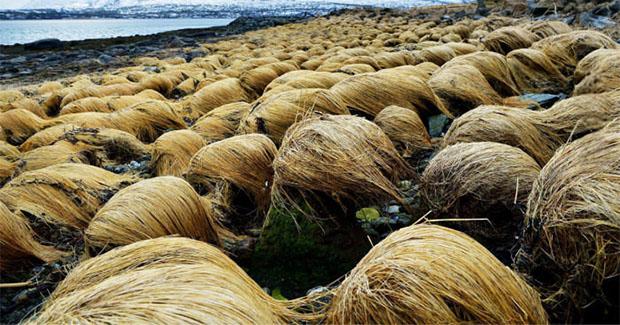 Senzacionalno: Otkriveno tajno mjesto na kojem Donald Trump uzgaja kosu [FOTO]