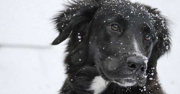 Dogs Trust u Kantonu Sarajevo osigurava pomoć za pse lutalice tokom zimskih dana