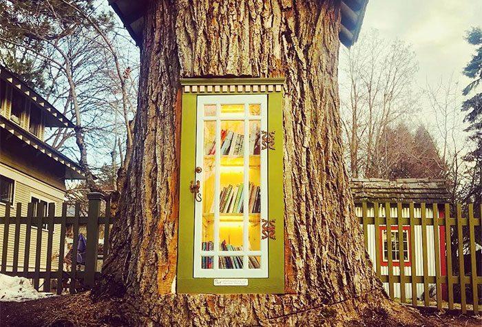 Bibliotekarka i umjetnica napravila malu biblioteku unutar 110 godina starog stabla