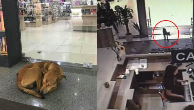Osvojio srca studenata: Pogledajte kako pas lutalica krade knjigu iz biblioteke fakulteta