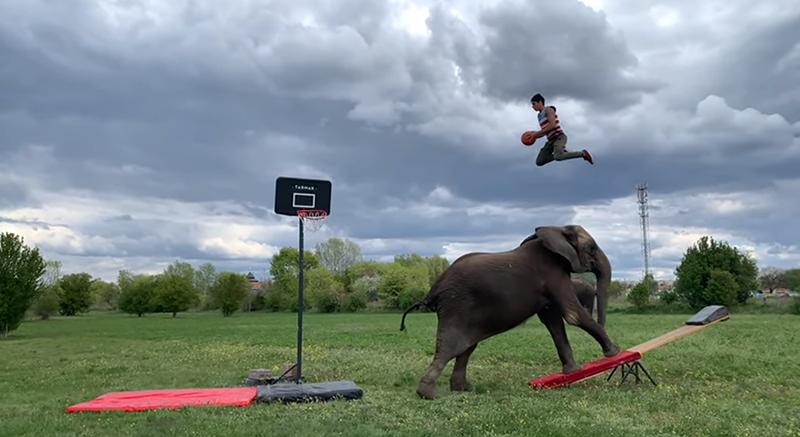 Upoznajte slonove koji vole igrati košarku i prakticirati jogu