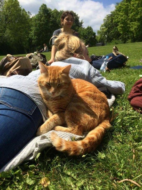 Zaštitni znak fakulteta: mačka pomaže studentima tokom ispitnih rokova