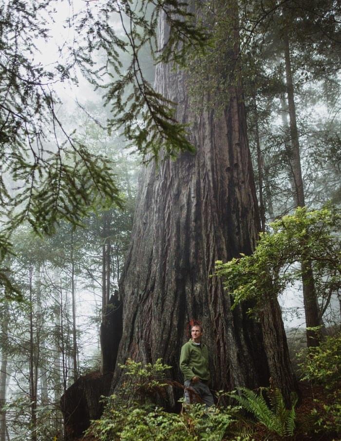 Amerikanac živio dvije godine na drvetu kako bi ga spasio