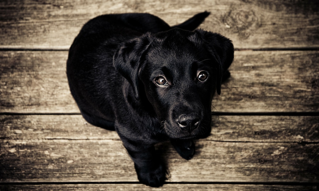 Upoznajte psa koji štedi novac za poslastice
