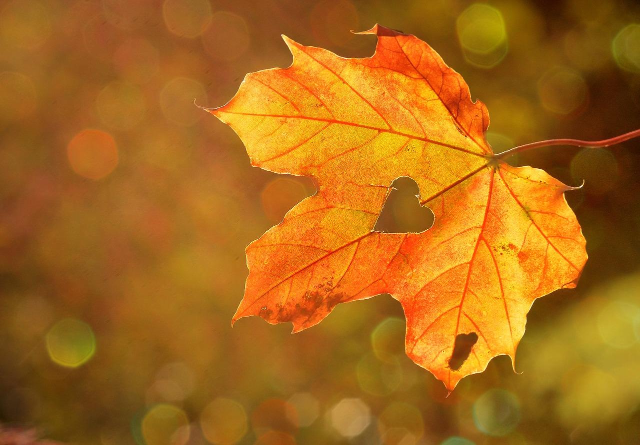 Petnaest fotografija koje pokazuju kako čarolija jeseni izgleda širom svijeta