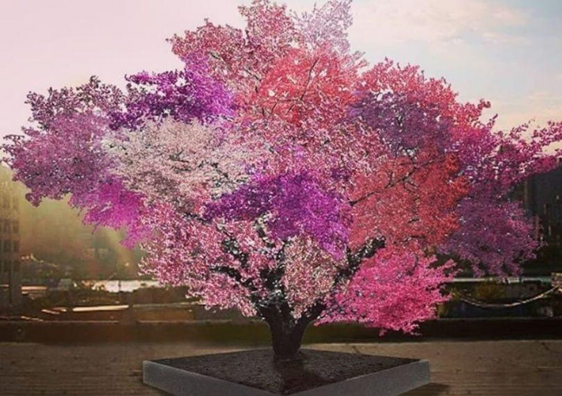 Vajar stvorio drvo koje rađa 40 vrsta plodova!