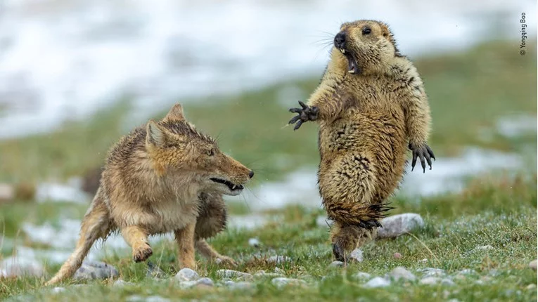 Najbolje ovogodišnje fotke divljih životinja prikazuju prava čuda prirode