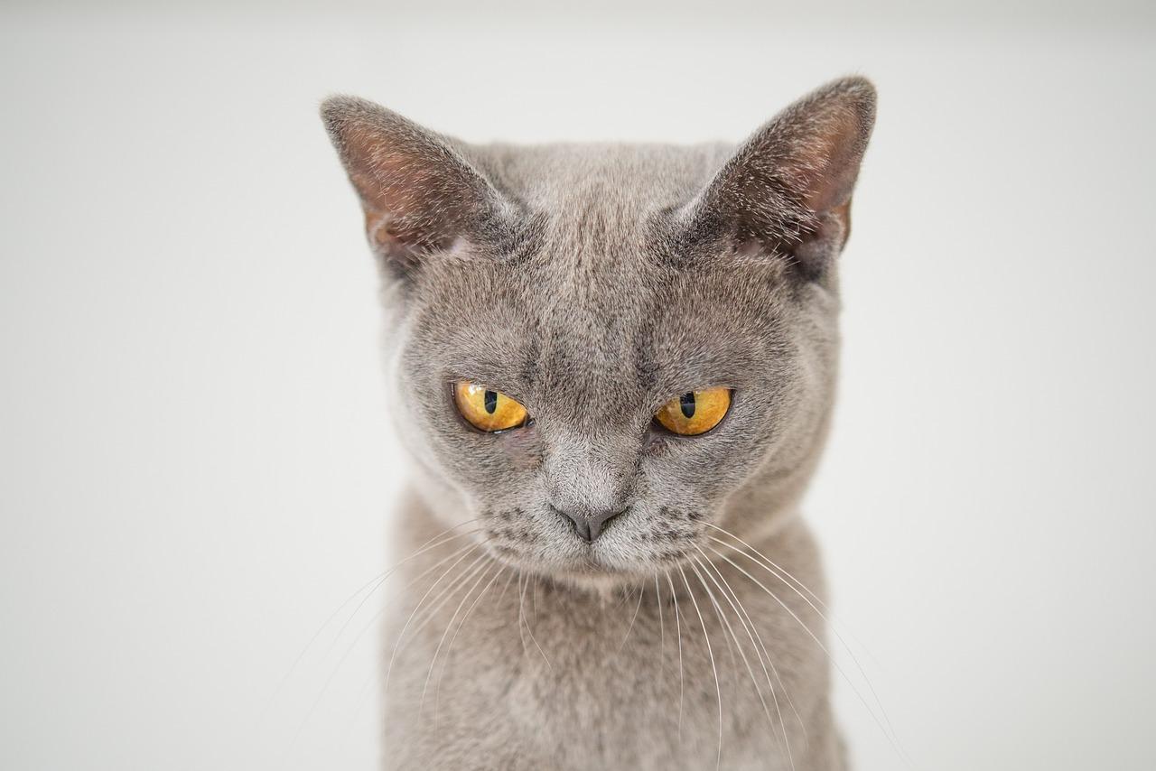širiti maca azijska supruga seks traka
