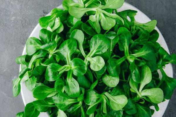 Čudotvorna biljka koja čuva naše zdravlje