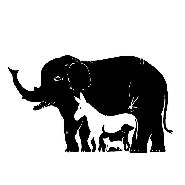 Možete li otkriti svih 13 životinja na slici?