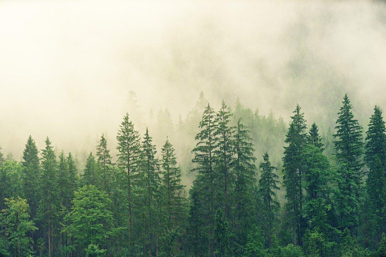 Prošetajte virtuelnim muzejom šumarstva Bosne i Hercegovine