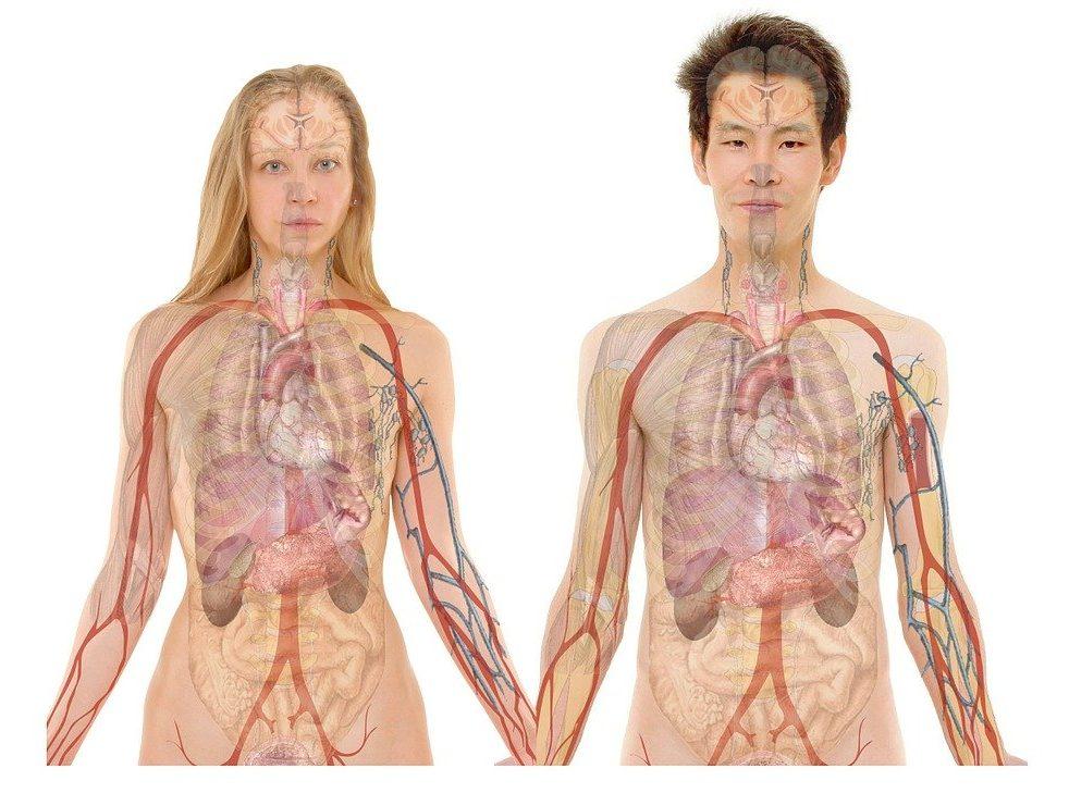 Nevjerovatne činjenice o ljudskom tijelu: Neke od njih sigurno niste znali
