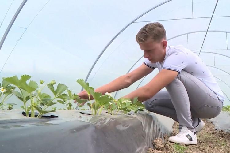 Mladi student perspektivu vidi u uzgoja jagoda