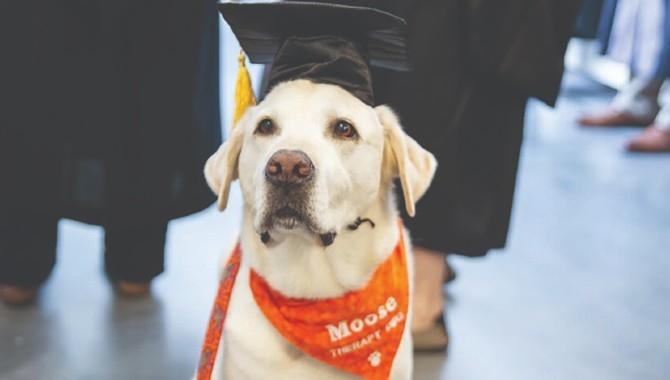 Na četiri šape dojurio do diplome: Ovaj labrador stigao čak do počasnog doktorata