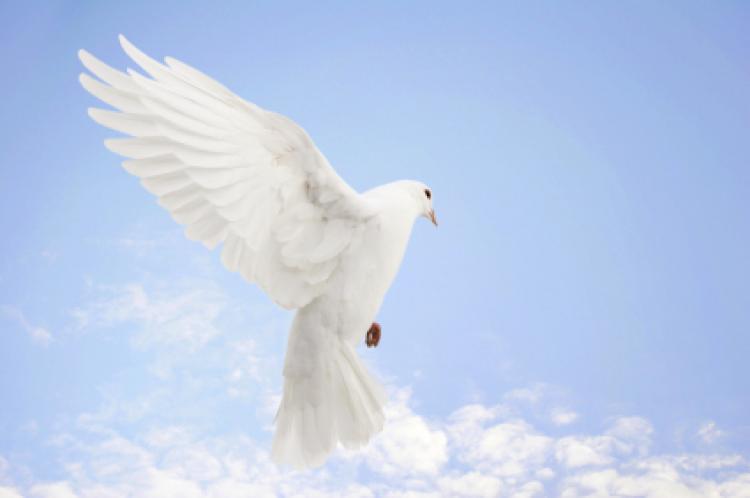 21. septembar – Međunarodni dan mira