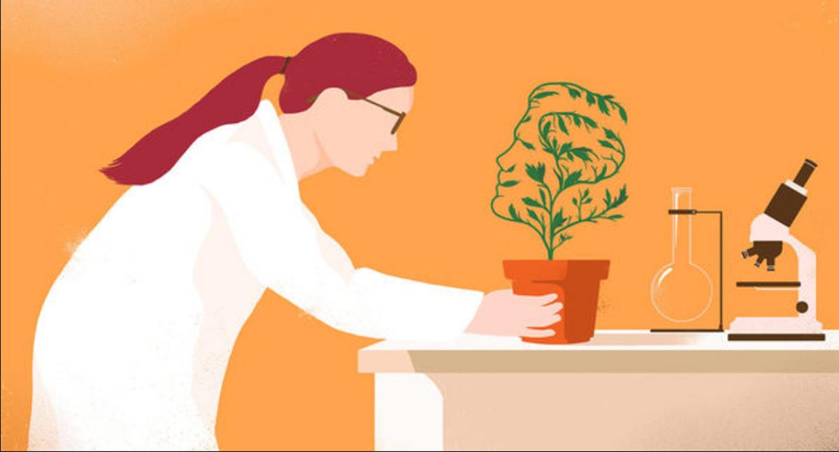 Idealne za studentske potrebe: Biljke koje vam prirodno poboljšavaju pamćenje