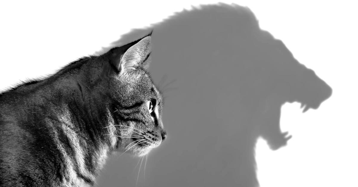 11 psiholoških trikova za one s manjkom samopouzdanja