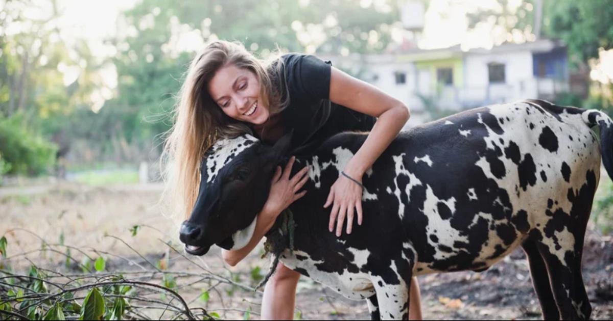Grljenje krava je novi svjetski trend: Korisna zabava koja oslobađa od stresa