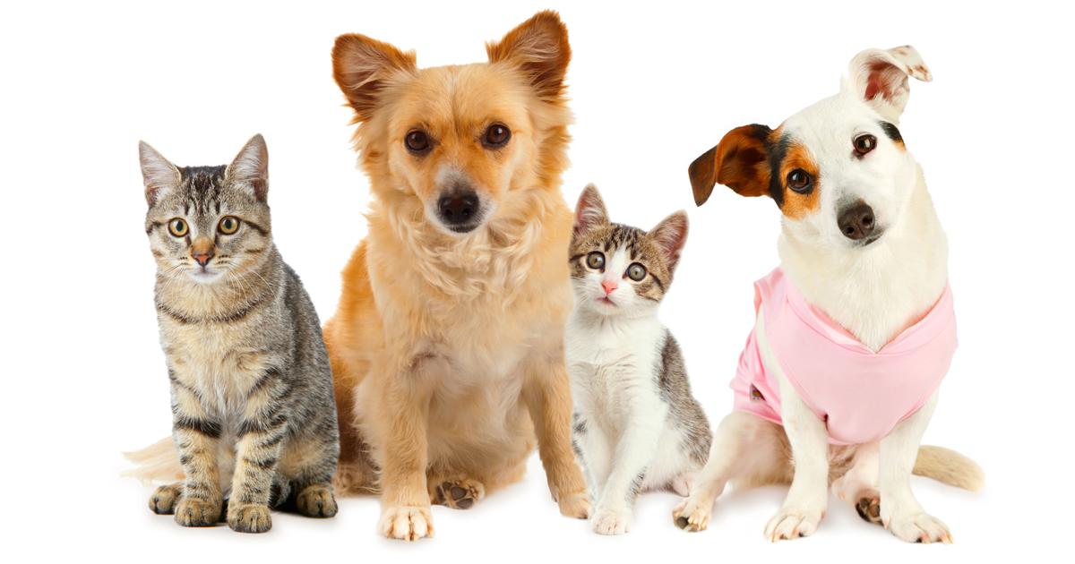 Pas ili mačka: Koji je bolji ljubimac za studenta?