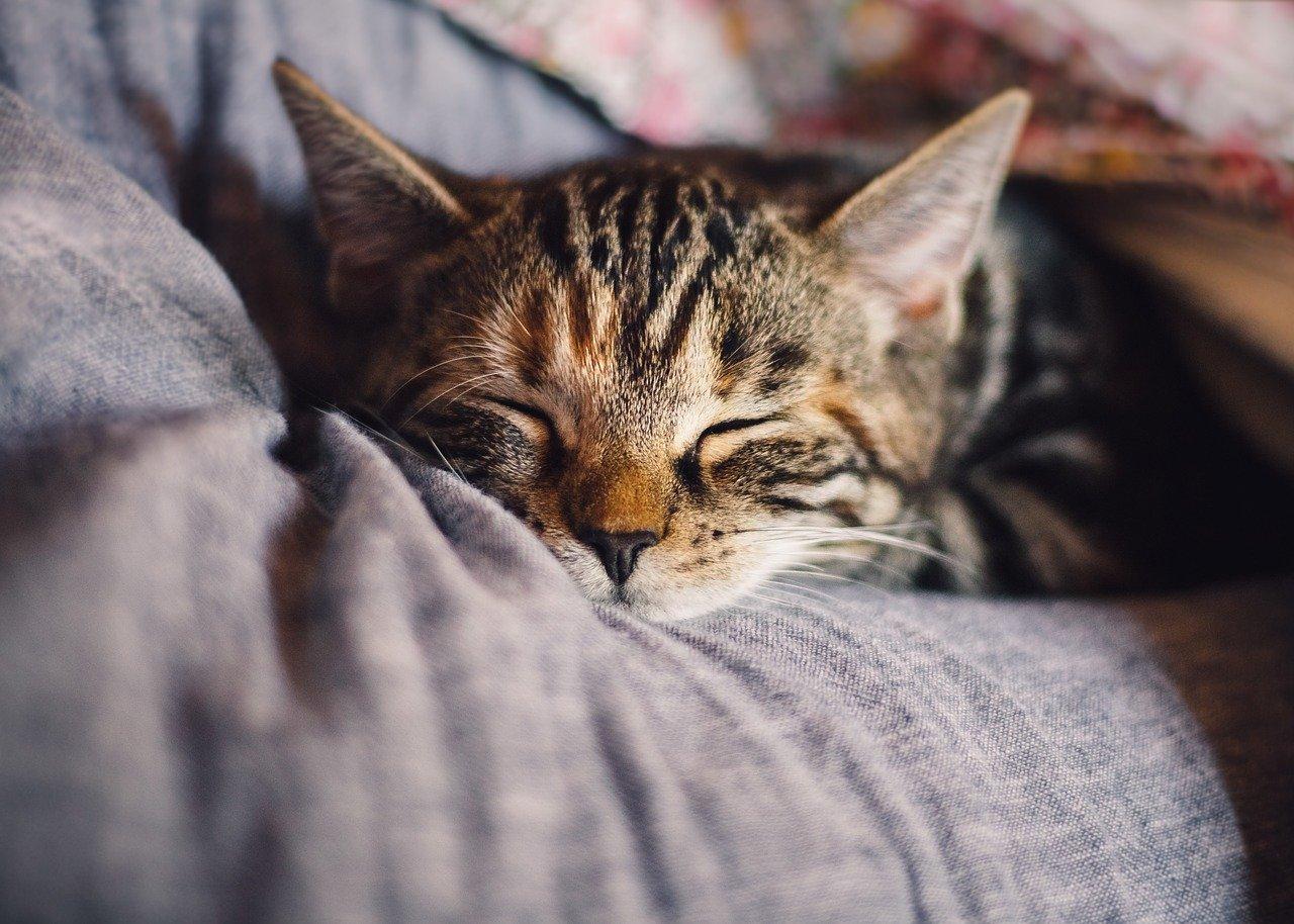 Tri razloga da prestanete spavati na desnoj strani ili na stomaku