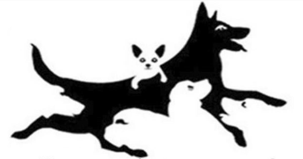 Test ličnosti: Koliko pasa vidite na fotografiji?