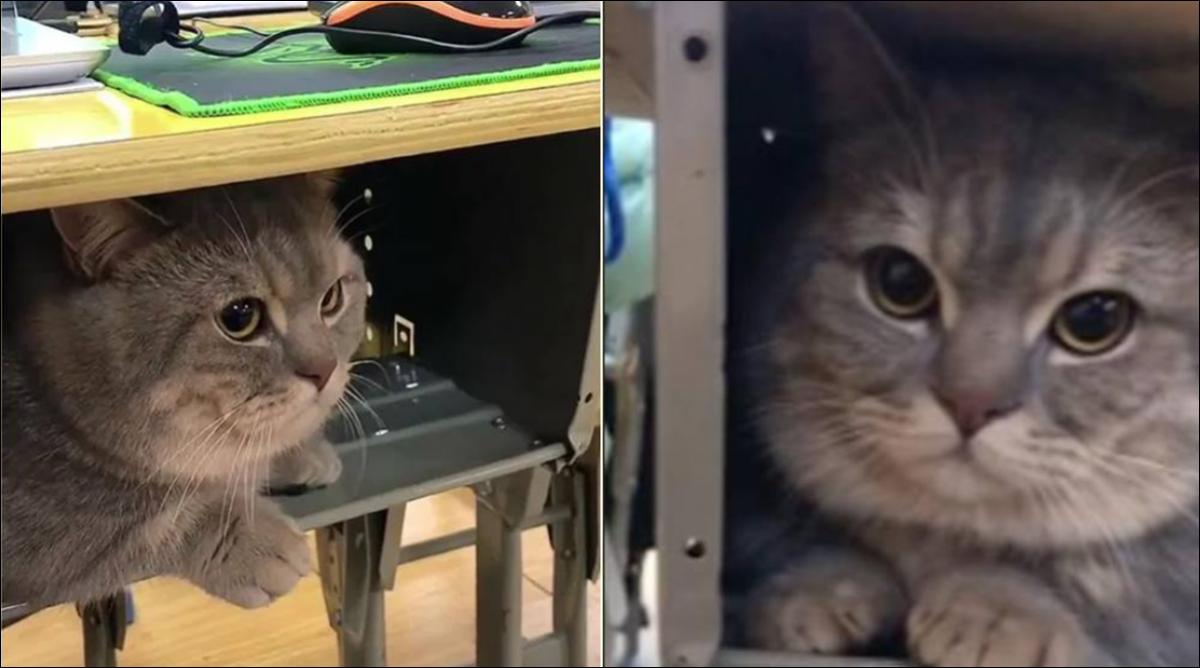 Mačak student: Studentica dovela mačka na predavnje, jer ne voli da ostane sam