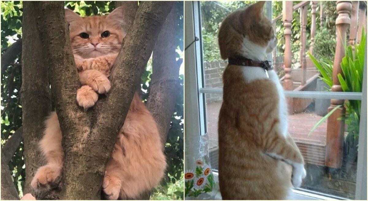 15 fotografija mačaka koje dokazuju da ih nikada ne možemo zaista razumjeti