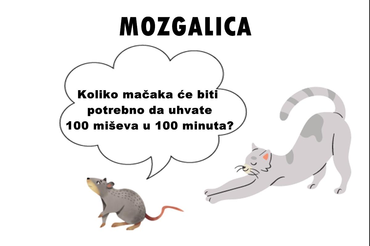 Mozgalica: Koliko mačaka će biti potrebno da uhvate 100 miševa u 100 minuta?