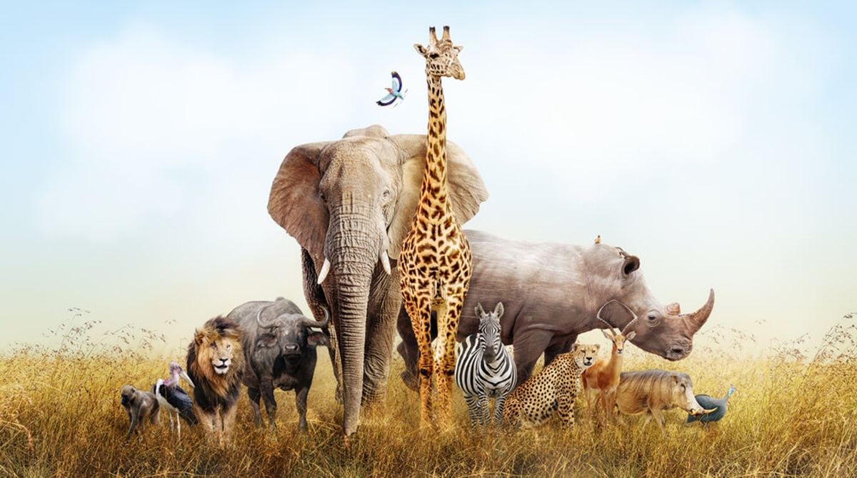 Test ličnosti: Izaberite tri životinje i saznajte nešto o sebi i o tome kako vas drugi vide