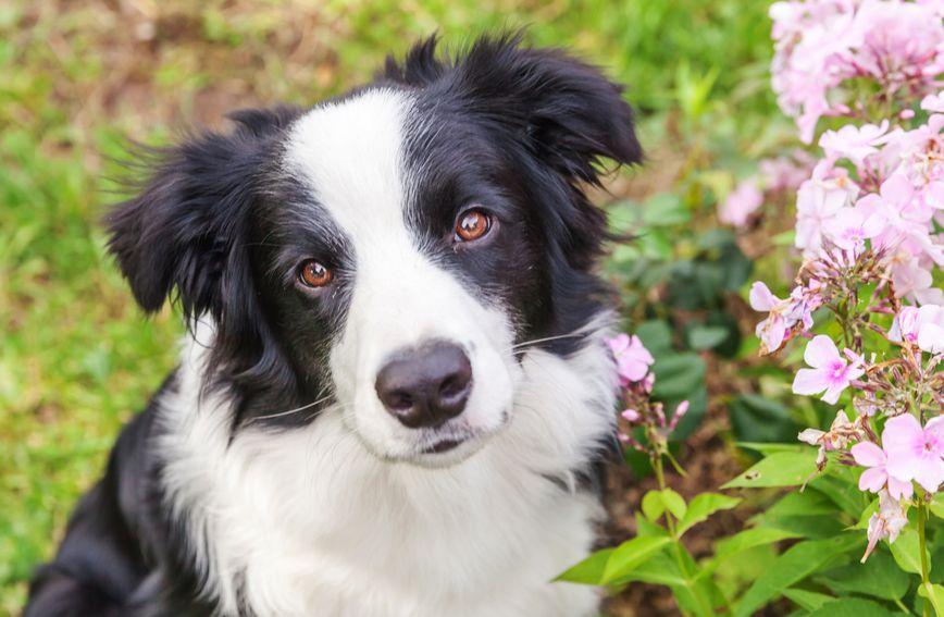 Vlasnik u testamentu ostavio psu pet miliona dolara