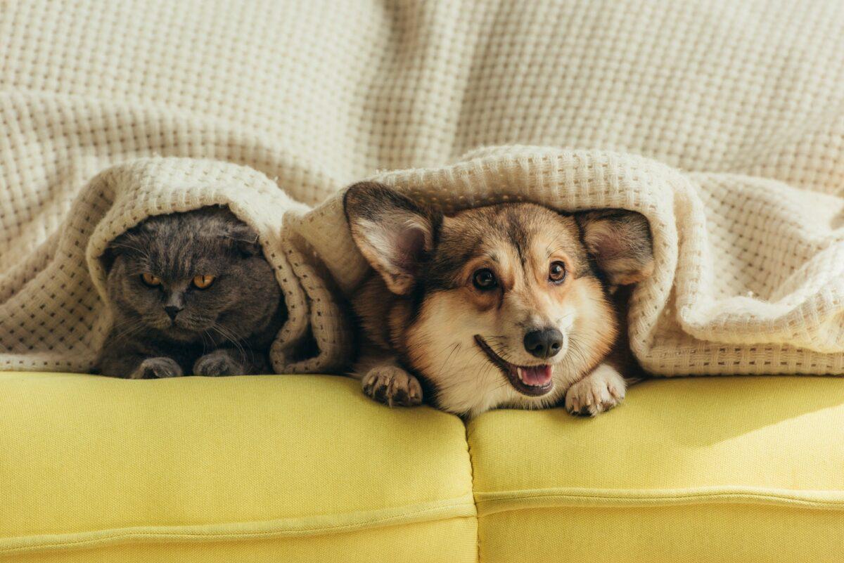 Pas ili mačka? Odgovor na ovo pitanje može otkriti puno toga o vama