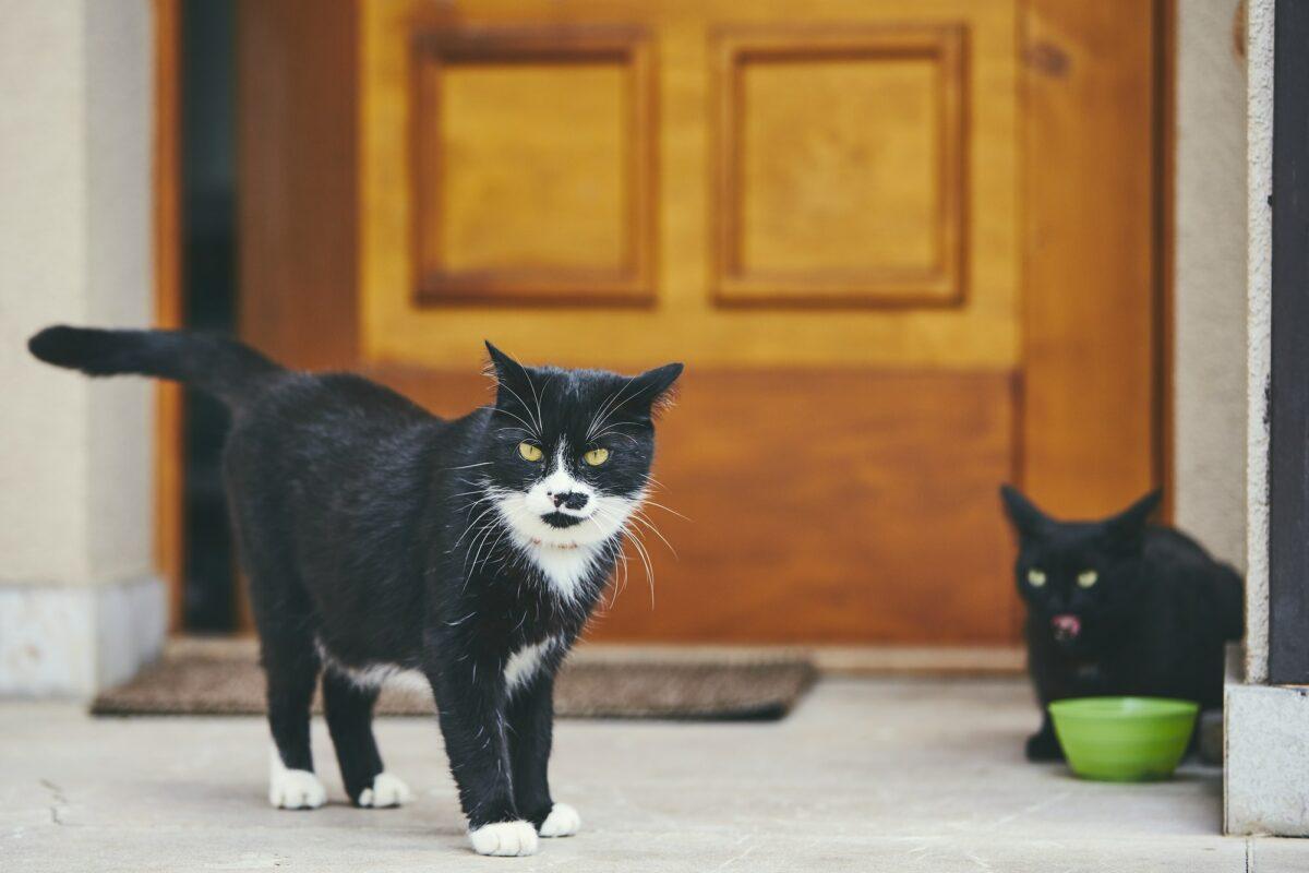 Zanimljivo: Zašto vas mačke čekaju pred vratima kad god se vratite kući