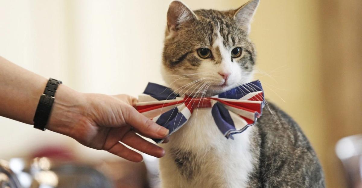Mačak Larry: Od lutalice do bitne ličnosti u britanskoj vladi
