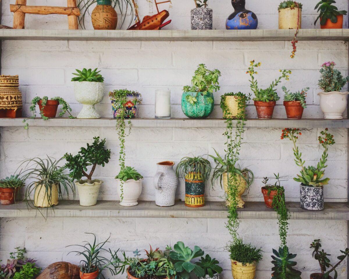 Za ugodnije studentske dane: 5 ideja za lako i jeftino uživanje u biljkama