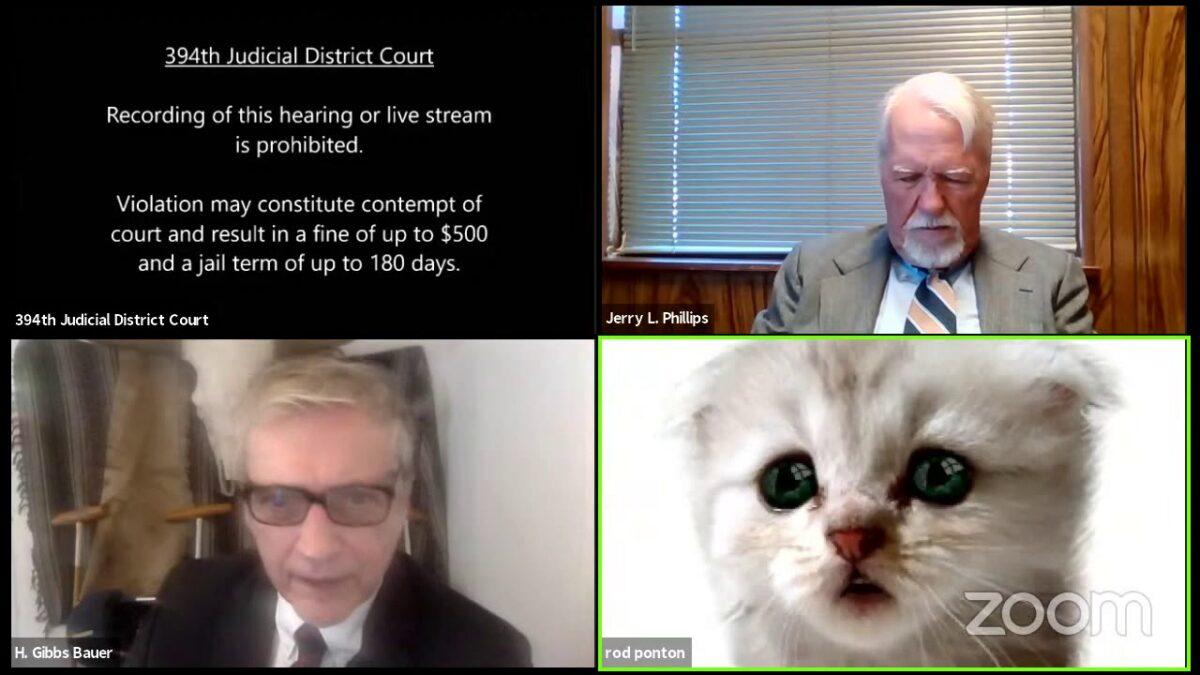 """Video nasmijao milione širom svijeta: """"Časni sude, obećavam da nisam mačka"""""""