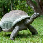 Turtle in grass