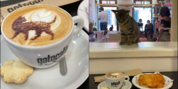 Gato kafe