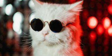 Portrait of disco furry cat in fashion eyeglasses on studio neon shining wall. Luxurious domestic ki