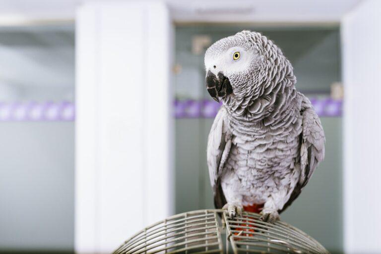 Portrait of a parrot bird.